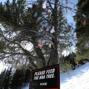 Axe 'feed the bra tree' at Mount Norquay