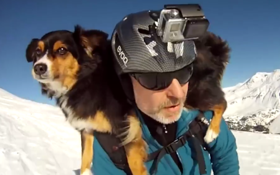 Skiing...not dangerous (even with a dog on your shoulders)